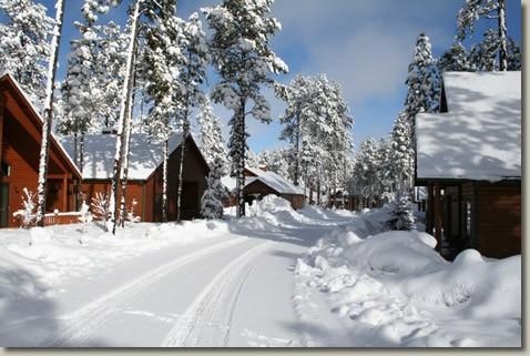 PTC_Snow